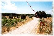 Hacia el Pinar (aprox.Km.29,00)